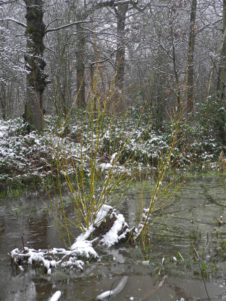 Oxleas Woods in the snow