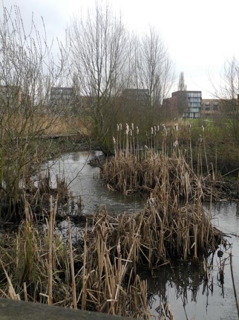 River Quaggy Sutcliffe Park