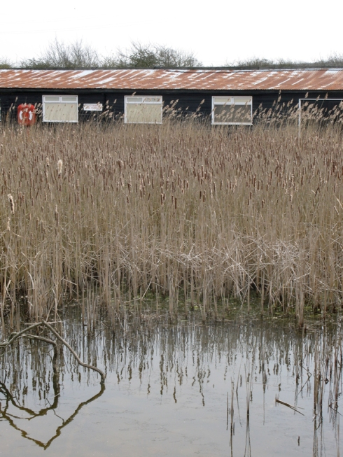 View of Timberman's Creek taken from Wat Tyler Park, Essex