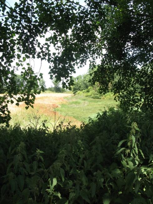 Eastcourt Meadow