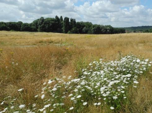 East Wickham Open Space - Green Chain