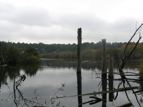 Chafford Gorges Nature Reserve