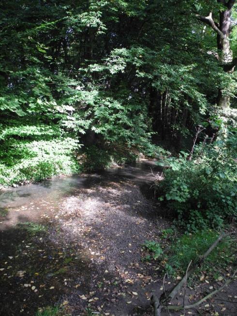 River Shuttle in Bexley Woods