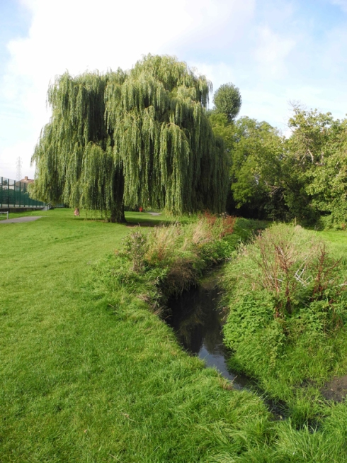 Weeping Willow banks of River Shuttle