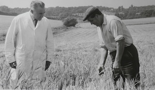 Dick Patching Meat & Poultry manager inspecting barley crop 1971 Woodlands Farm