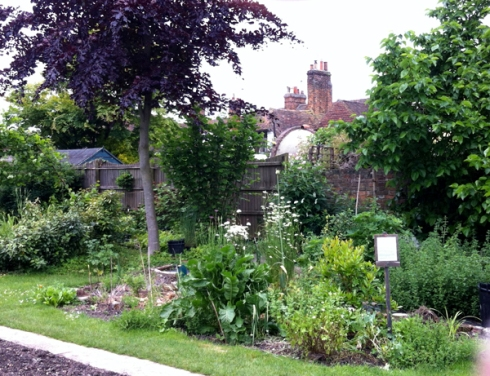 Faversham Abbey Physic Garden